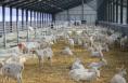 第二届世界奶山羊产业发展大会将于19日在富平县召开