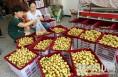 大荔全方位监测冬枣 确保消费者吃得放心