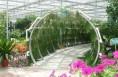 渭南市每年将创建10个市级现代农业产业园