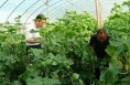 渭南市首家新型职业农民协会在澄城县成立