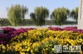 大荔4A景区同州湖景区16万盆鲜花装扮迎国庆