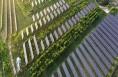 蒲城光伏产业打造生态走廊