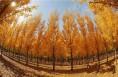合阳群众徜徉金色海洋 乐享生态红利