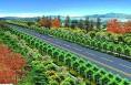 大荔县全力打造全域绿色宽幅林带长廊