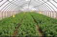 澄城:园艺站积极应对极端天气 确保设施农业生产