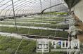 渭南市對疫情期間蔬菜移栽定植實施專項補助