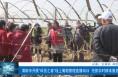 """渭南市開展""""科技之春""""線上葡萄管理直播培訓  搶抓農時精準服務"""