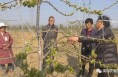 合阳百良:兴产业  助脱贫 多措并举促进农民增收