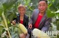 大荔:从农业产业转型中走出来 种花又种瓜