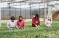 """农产品贴上""""二维码""""  智慧农业让大荔走上高质量发展之路"""