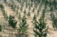 """""""沙窝窝""""变最美绿洲 大荔县植树造林提升沙区植被覆盖率"""