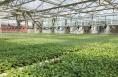 大荔:强化科技引领 农业发展提质增效