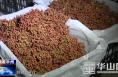 渭南市华州区:花椒丰收产销旺交易市场售卖忙