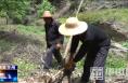 第一书记孙涛:发展森林抚育助脱贫壮大集体经济奔富路