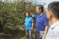 渭南市科技活动周系列报道(二)小酥梨带动大发展 科技助推产业升级