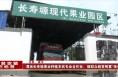 """渭南长寿塬果业种植农民专业合作社:做群众脱贫致富""""领头雁"""""""