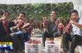 《直通县市》富平:新品葡萄俏枝蔓 种植群众喜丰收