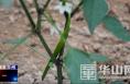渭南市华州区下庙镇:大棚蔬菜生机盎然 产销两旺促农增收