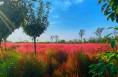 白水县:倾城粉黛期相许 没入丛中乱作花