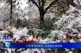 入冬首雪如期至 美丽城市披银装