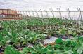 白水县花卉基地已累计创收50余万元
