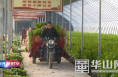 渭南经开区前锋村:设施农业让集体经济活起来