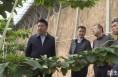 《直通县市》高成文调研澄城县农业产业发展和乡村振兴工作
