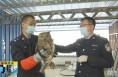 《直通县市》韩城:猫头鹰误入民宅 警民联手救援放生