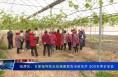 临渭区:专家指导阳光玫瑰葡萄栽培新技术 200名果农受益