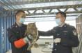 韩城:猫头鹰误入民宅 警民联手救援放生