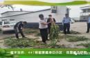 富平张桥:447株罂粟藏身旧小区 民警依法铲除