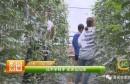 渭南市第二届最美职业农民候选人事迹展播 | 技术学到手 把苦变成甜