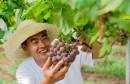 首届农民丰收节迎来农产品购物狂欢!全国六个分会场其中有你家乡么?