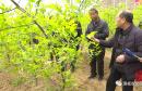 渭南市春季果园管理云课堂:田间地头变课堂 专家助农强春管