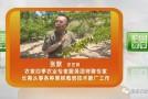 壮壮帮忙:李子树树势旺解决办法