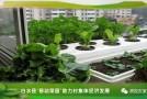 """白水县""""移动菜园""""助力村集体经济发展"""