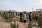 临渭区下邽镇:植树造林添新绿 乡村振兴增活力