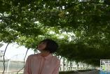 《天下旅游》夏季采摘好去处,渭南葡萄产业园