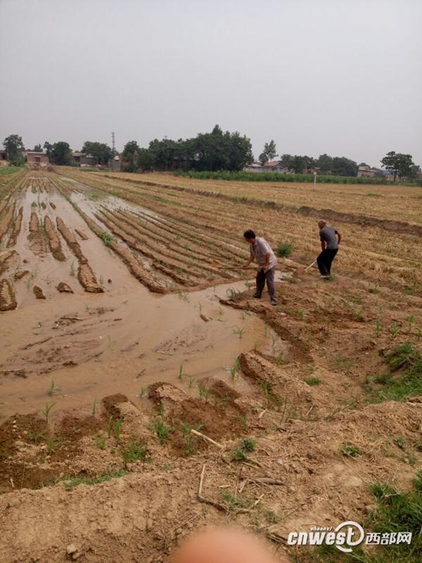 渭南遭遇持续高温 省交口抽渭灌区全力抗旱灌溉图片 449899 600x800