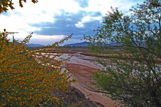 流过甘肃省陇西县十里铺村的渭河,给周边村子发展苗木种植提供了充足的水源。