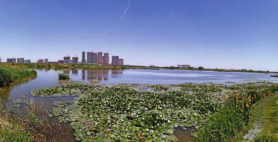 西安灞渭桥车游湿地公园已形成良好生态。