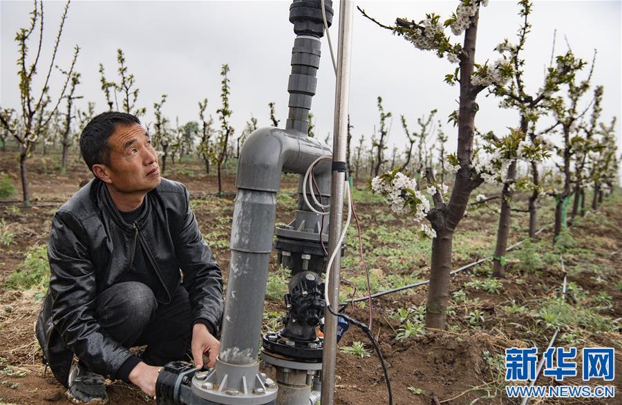 (脱贫攻坚)(2)陕西渭南:千亩现代樱桃园助力群众致富