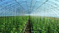 市农技中心:大棚蔬菜肥害和高温危害的防治措施