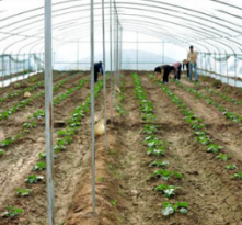 我省对蔬菜规模经营移栽定植实施专项补助