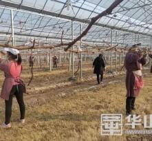临渭区:全面开放农业生产服务类企业的复工复产
