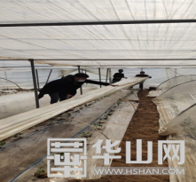 【战疫情 渭南力量】蒲城县尧山镇:防疫复耕两不误  群众心里暖如春