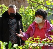 """大荔枣树开春遭生长""""难题"""" 专家变""""救火队员""""线上线下忙指导"""