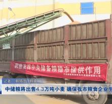 中储粮将出售4.3万吨小麦 确保我市粮食企业生产平稳
