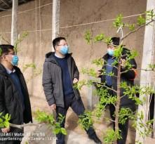 【战疫情 渭南力量】澄城县冯原镇:马村疫情防控有质量 春耕生产快落实