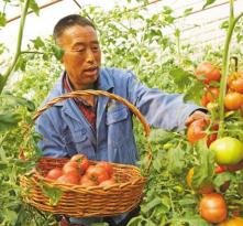 """渭南:守住""""米袋子"""" 护好""""菜篮子"""""""